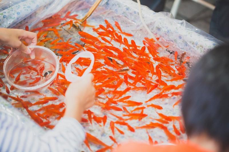 金魚とドライフラワーと。